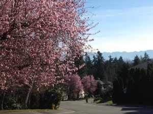 Early spring -- a great day for a walk ... and poetry