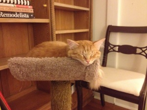 Memphis cat: Terance