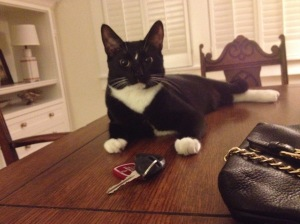 Memphis cat: Withnail