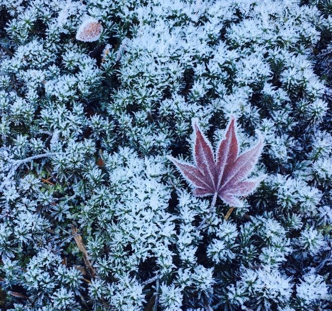 Frost.in.morning.jpg