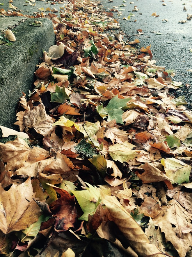 Autumn leaves in the gutter