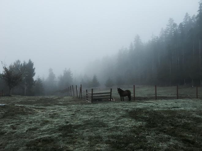 Late autumn gloom
