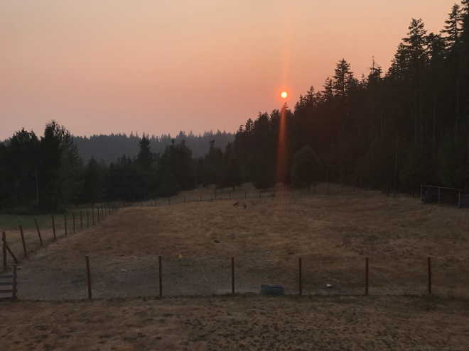 Canada forest fires sent smoke south into Washington state