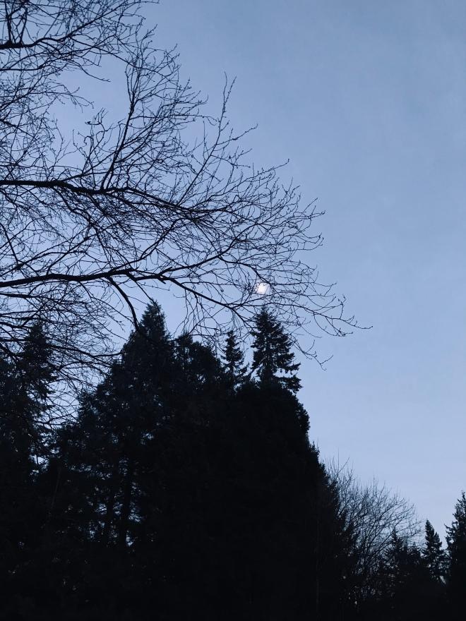 Frozen moon through grey trees